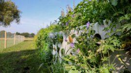 VOORTHUIZEN - Groei van planten in de nieuwe bioblokkeerwand