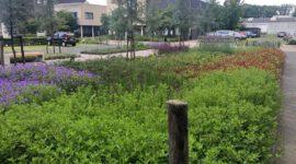 Bedrijfstuin_duurzaam_natuurlijk_groen_ontwerp_aanleg_onderhoud_zakelijk..._820
